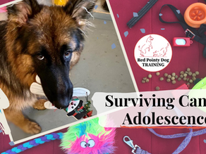 Surviving Canine Adolescence