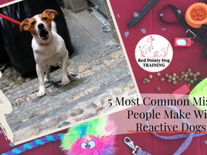 5 Most Common Mistakes People Make With Reactive Dogs.