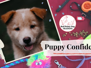 3 Simple Ways to Boost Puppy Confidence