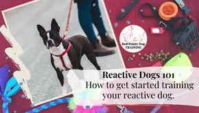 Reactive Dogs 101,  How to get started training your reactive dog.