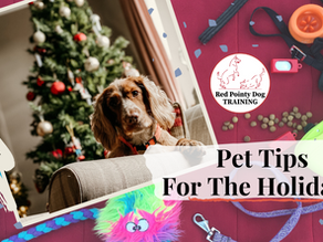 Pet Tips For The Holidays