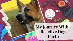 My Journey With a Reactive Dog: Part Two.