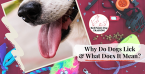 Why Do Dogs Lick and What Does it Mean?