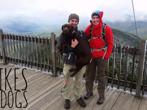 5 NH Hikes for Dogs