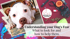 Understanding Your Dog's Fear. What to look for and how to help them.