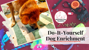 DIY Dog Enrichment