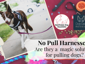 No Pull Harnesses, are they a magic solution for pulling dogs?