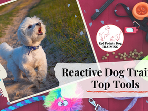 Reactive Dog Training Top Tools