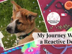 My Journey With a Reactive Dog:  Part One