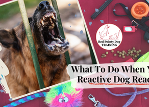 What To Do When Your Reactive Dog, Reacts.