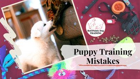 Puppy Training Mistakes: 4 Things to Avoid.