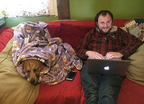 How to be productive from home, even with your dog.