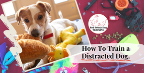 How To Train a Distracted Dog.