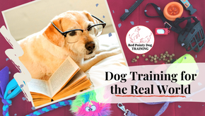 Dog Training for the Real World