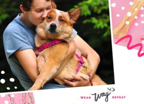 Podcast Feature: Wear Wag Repeat