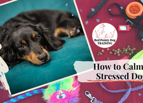 How to Calm a Stressed Dog.