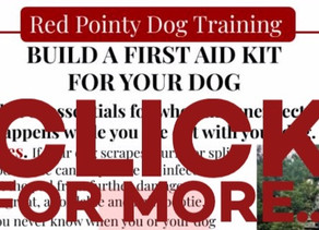Build Your Dog First Aid Kit