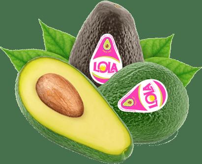 avocado lola