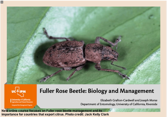UC IPM online courses: New Fuller rose beetle course and early-bird pricing