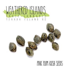 Pink_Plum_Kush_Seeds_03.29.2021-03.jpg