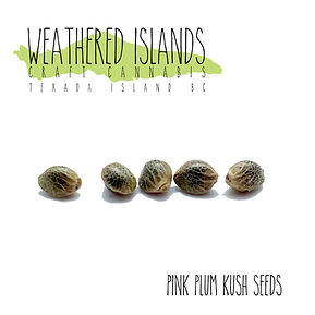 PPK seeds.jpg