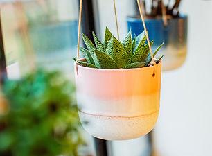 SBMojave Glaze Pink Hanging Planter.jpg