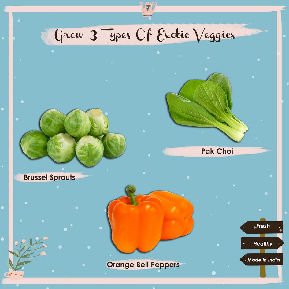 exotic veggies4.png
