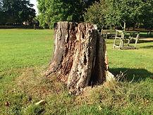 stump grinder tree removal