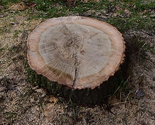 tree trimming stump removal rochester ny