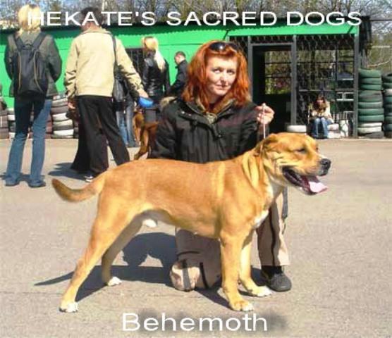 HSD Behemoth