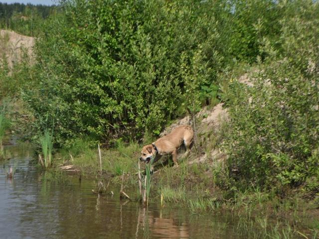 Hekate's Sacred Dogs Yantarka - 8 m