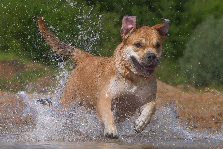 Hekate's Sacred Dogs Yantarka - 1 year 9 months