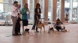 Hekate's Sacred Dogs Yantarka - 1 год