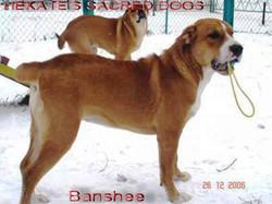 HSD Banshee