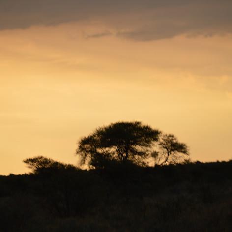 Africa Skyline