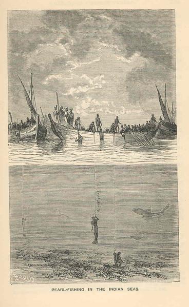Pearl-Fishing in the Indian Seas