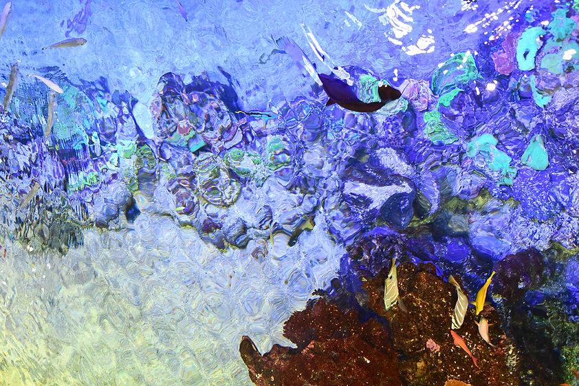 Nausicaa-91_edited.jpg
