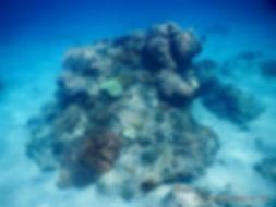 Coral garden, snorkeling Padang Bai, Bali