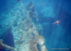 Snorkeling USAT Liberty Wreck in Tulamben, Bali, Indonesia