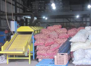 Agricultores alertan que control de precios encarece la papa en plena sobreproducción
