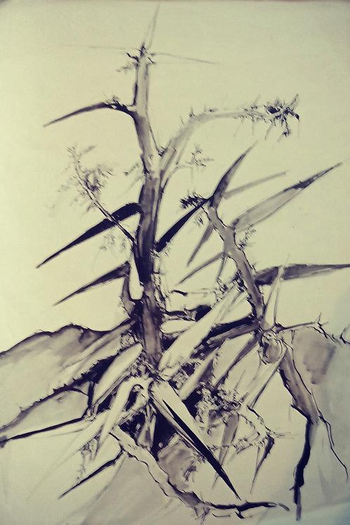 Wag 'n bietjie thorns (South Africa)