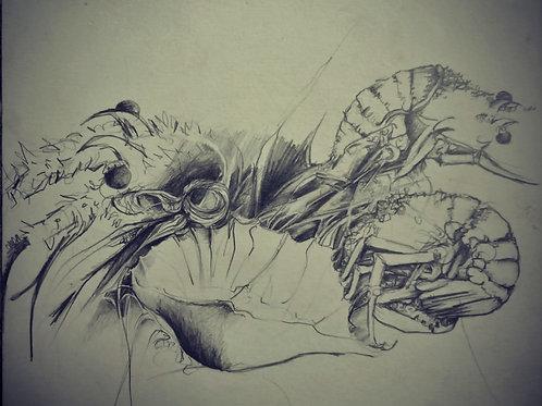 Crustacean still life