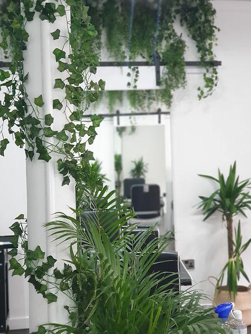 Trees jungle.jpg