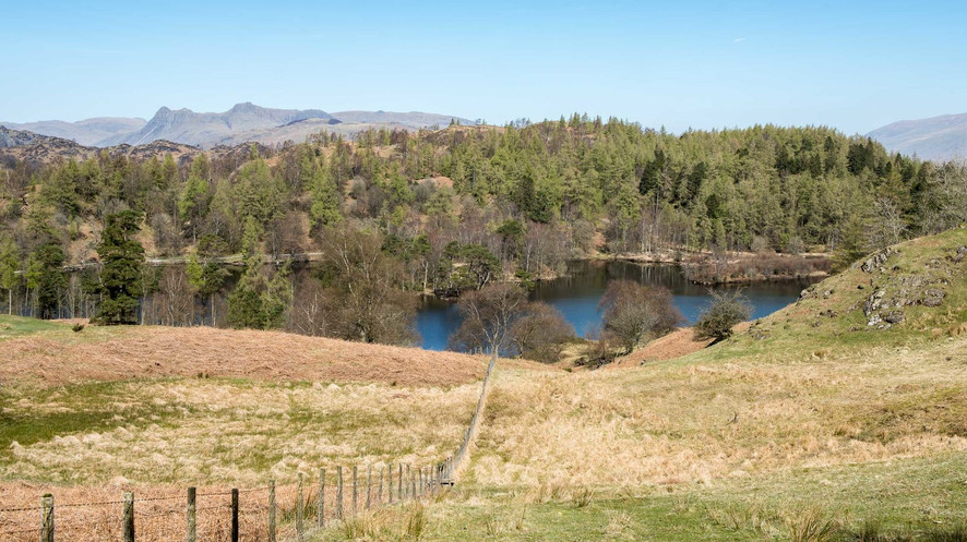 www.wildacre.camp-rentmyland-camping-stayonmyland-revenuefromland-rentingland-camponmyland-privatecamping-homecamper