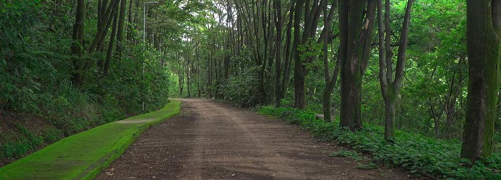 Estrada-com-Árvores-I-Imagem-Bruno-Castr