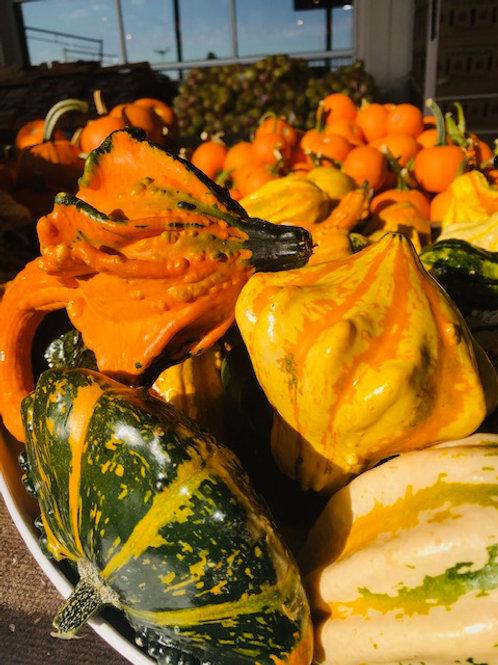 Ornamental, Gourds  (Each)