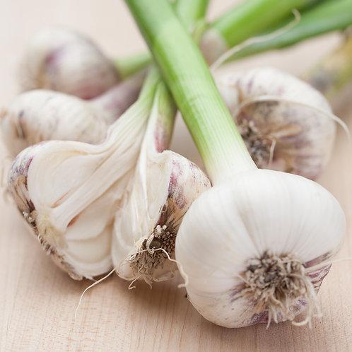 Garlic, Red Russian (Lb)