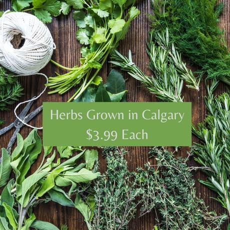Herbs Grown in Calgary $3.99 Each