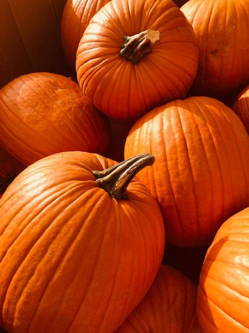 Pumpkin, carving (Approx 21 Lbs)