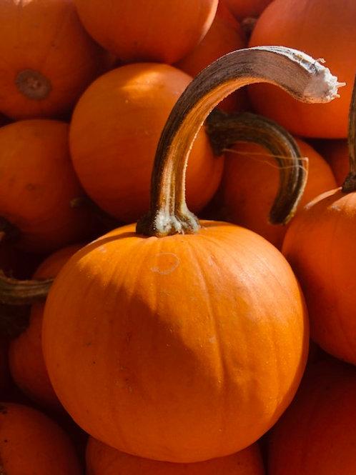Pumpkin, pee wee (Each)